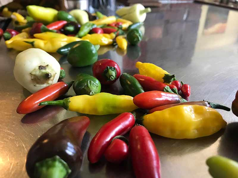 Green, yellow, red peppers laid out on table
